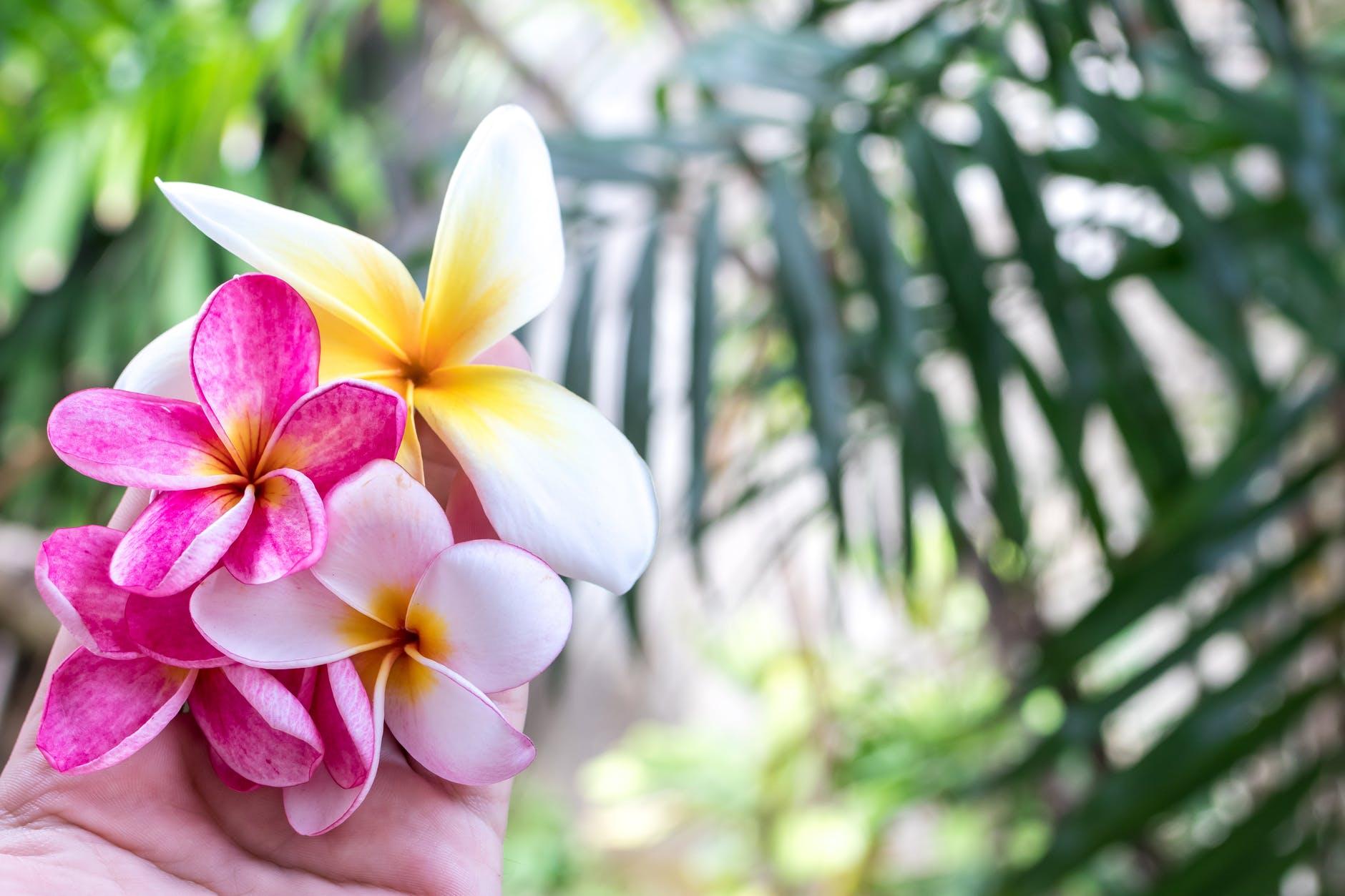 bali beautiful beauty bloom